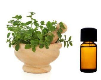 Minyak Oregano minyak oregano minyak obat alami yang lebih dahsyat dari antibiotik vebma