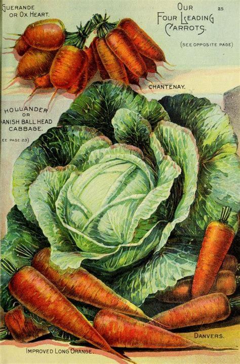 best vegetable seeds best 25 seed catalogs ideas on vintage seed