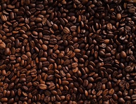 coffee seed wallpaper coffee images download free images on unsplash