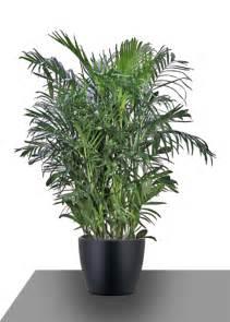 5 house plants that improve air quality flower blog