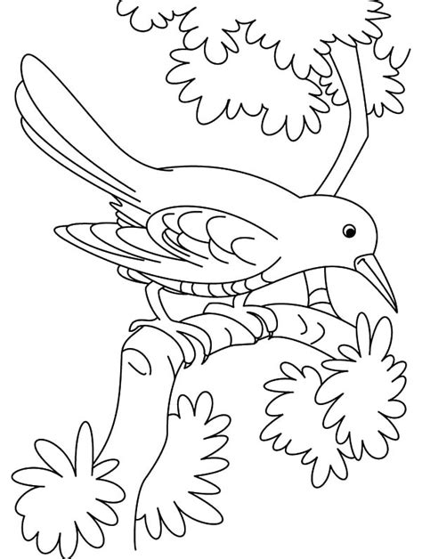 coloring pages birds and insects cuckoo