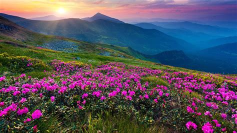 wallpaper flower view mountain flower live wallpaper android apps on google play