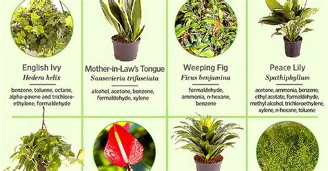 common indoor plants that improve air quality diy to do list pinterest air plants plants