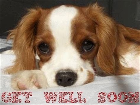 where to get puppies get well soon puppy graphic