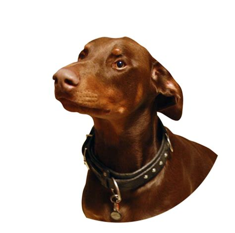 elevated feeders for large breeds elevated bowls for large breeds pets wallpapers
