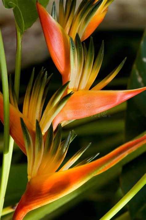 immagini fiori tropicali fiori tropicali immagine stock immagine di astrazione