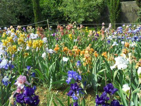 giardino iris firenze la finestra di stefania i giardini delle meraviglie