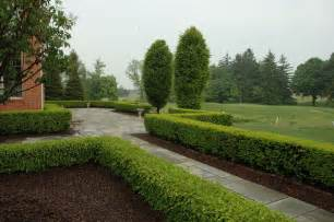 boxwood landscaping formal bluestone terrace with boxwood hedge traditional