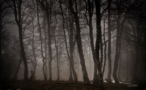 el bosque oscuro the 8466660925 un triste tigre de los 193 rboles al bosque