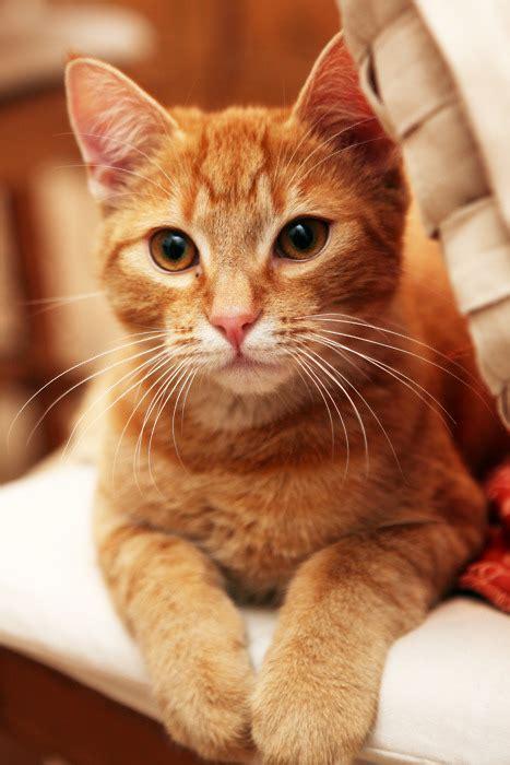 Tshirt Cat Lh 2 Kitties