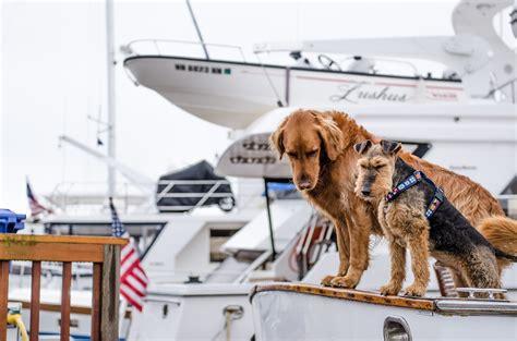 si possono portare i cani sul treno consigli per viaggiare in nave con il cani su navi