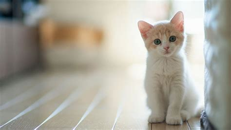 Balmut Kucing High Quality kittens wallpapers 26 free