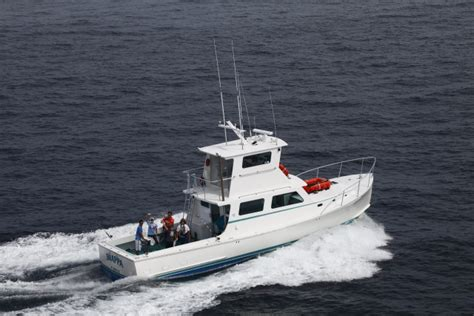 charter boat only way shark cage diving usa