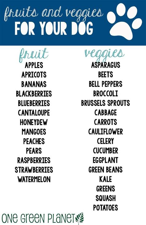 vegetables safe for dogs how to add summer fruits and vegetables to your s diet caign summer and