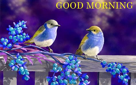 good morning wishes with birds pictures images page 23