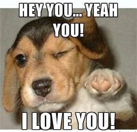 I Love Memes - i love you puppy meme www pixshark com images