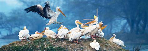 bharatpur bird sanctuary wildlife  india