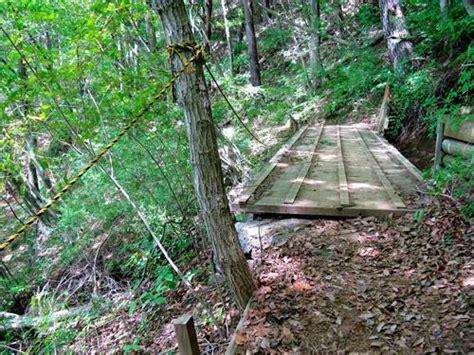 bosque aokigahara el bosque de los suicidios malditos aokigahara el bosque de los suicidios