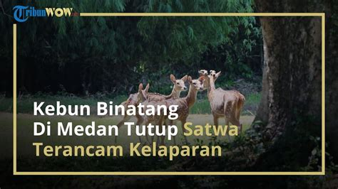 kebun binatang  medan tutup satwa terancam kelaparan