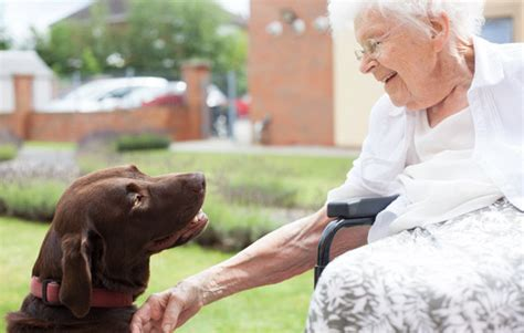 the dog house gainsborough activities gainsborough house l m healthcare
