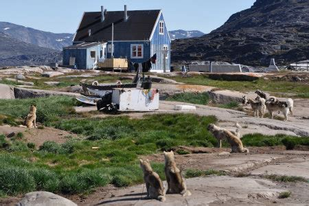 pictured rocks boat tours dogs rodebay excursion in greenland to visit a local