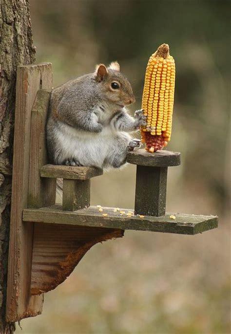 squirrel djur och inspiration