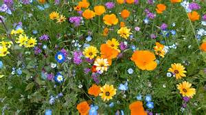 Flowers In Inverness - your pictures of scotland 22 29 july bbc news