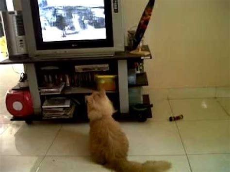 film animasi kucing kucing lucu kecanduan film kartun youtube