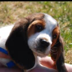 Best Bathtub For Newborns 62 Best Images About Cute Puppy S On Pinterest Basset