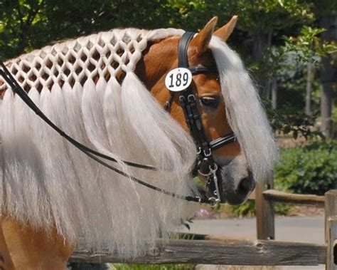 barrel racing horse hair braids 215 best images about cowboys cowgirls and horses on