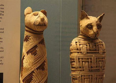 imagenes momias egipcias botines inaugura hoy la muestra de momias de mascotas