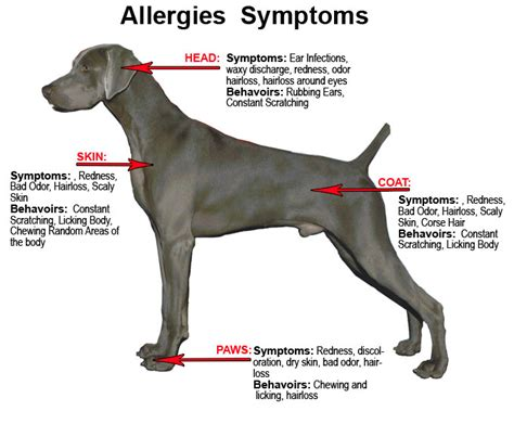 how to treat allergies how to treat food allergies for dogs
