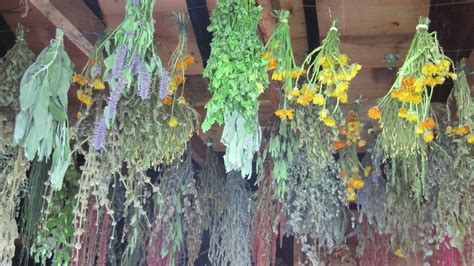 hanging herbs a stitcher s heirlooms
