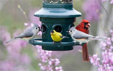 wild birds unlimited best bird seed to attract birds