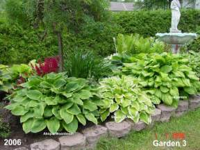 hostas flowers pictures beautiful flowers
