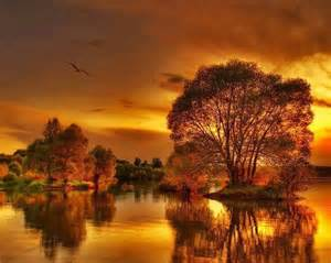 Flowers Love Quote - gorgeous fall sunset pictures photos and images for