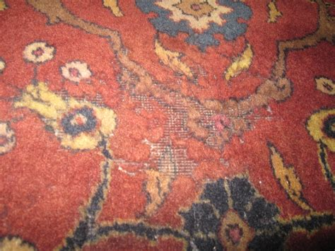 moths in rugs image gallery moth damage
