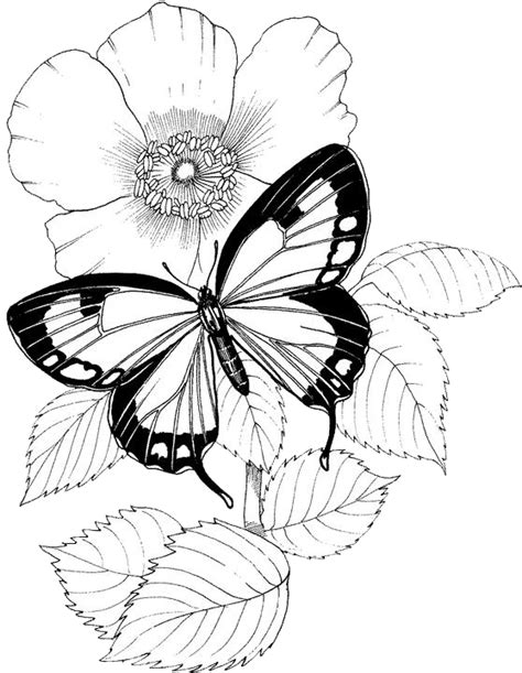 complex butterfly coloring pages butterfly flower coloring pages coloring page for kids