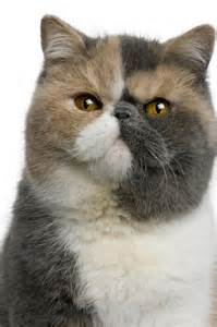 types of cats different breeds of cats slideshow