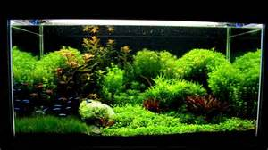 Dragon Stone Aquascape Aquascaping Lost Space Youtube