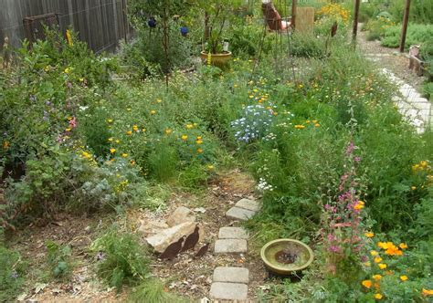 replacing your lawn bees need more than rocks and cactus