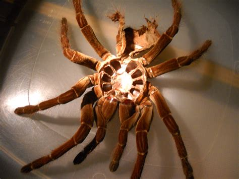 Shedding Of The Exoskeleton by Harvest Tours The Creepy Crawly And Lovable Pause