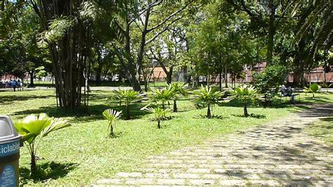 jardin medellin jardin botanico medell 237 n bosque tropical jard 237 n de palmas