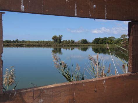 vasche di maccarese birdwatching nelle vasche di maccarese visit fiumicino