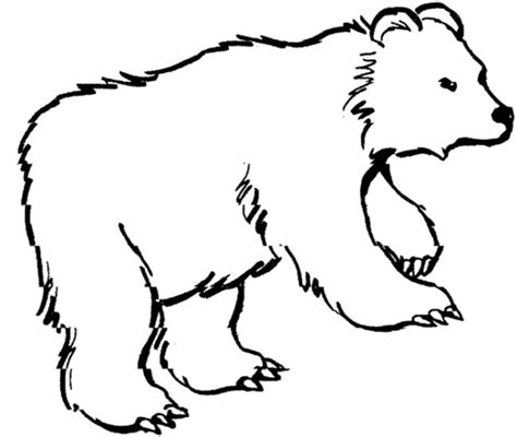 bear coloring page for preschool bear coloring page baybear pinterest bears teddy