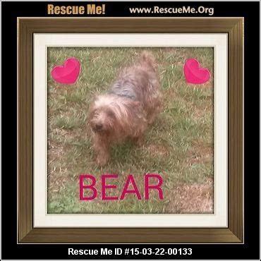yorkie rescue fort myers florida yorkie rescue adoptions rescueme org