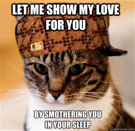 Shaved Cat Meme - scumbag cat memes quickmeme