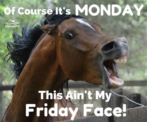 Funny Horse Memes - best 25 funny horse memes ideas on pinterest