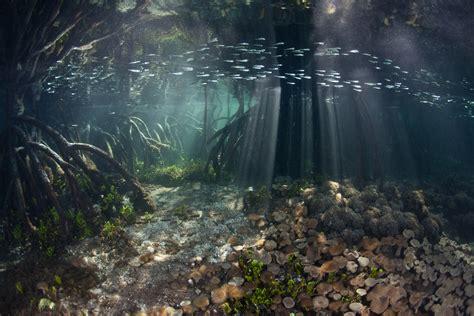 underwater photographer ethan danielss gallery