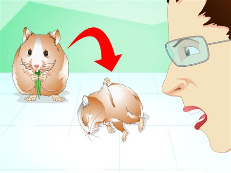 how to if your is 3 ways to if your hamster is healthy wikihow
